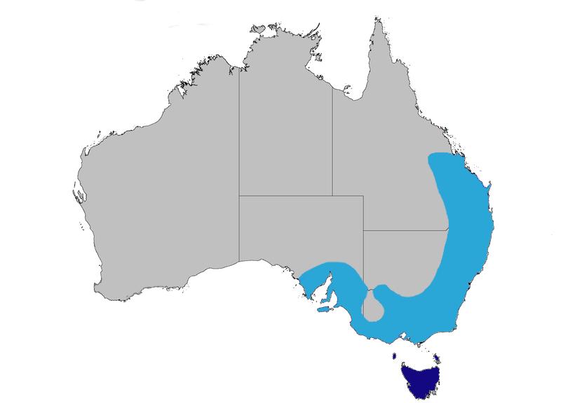 Superb Fairy-wren map