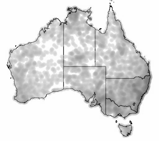 Australian Owlet-nightjar map