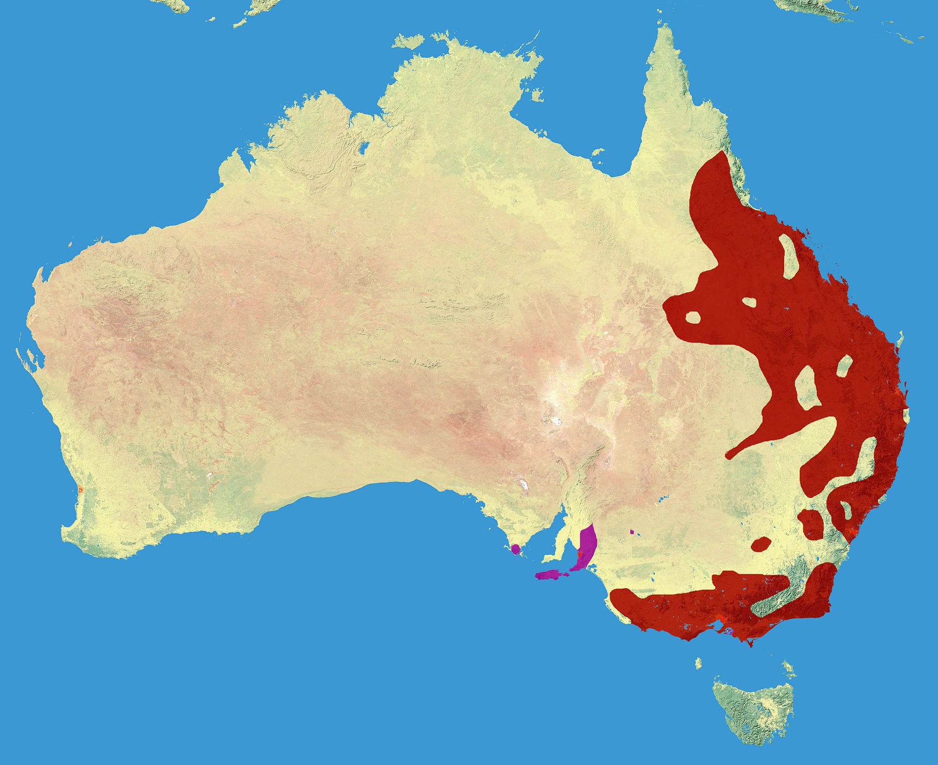 Koala_Range map