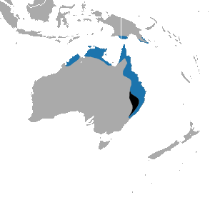 Northern_Brown_Bandicoot_map