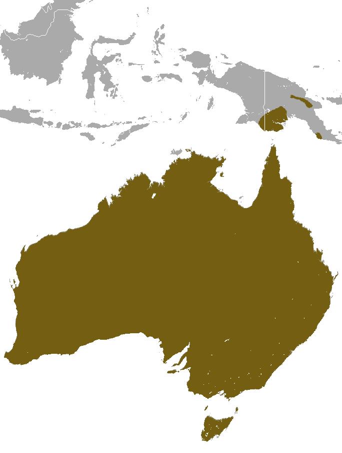 Short-beaked_Echidna_map