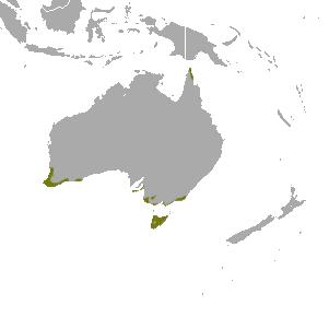 Southern_Brown_Bandicoot_map