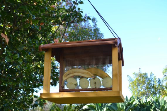 Wooden Bird Feeder for Australian wild birds Mansion Feeder image 6